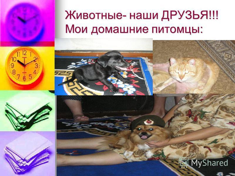 Животные- наши ДРУЗЬЯ!!! Мои домашние питомцы: