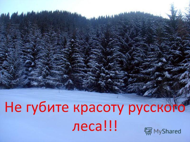 Не губите красоту русского леса!!!