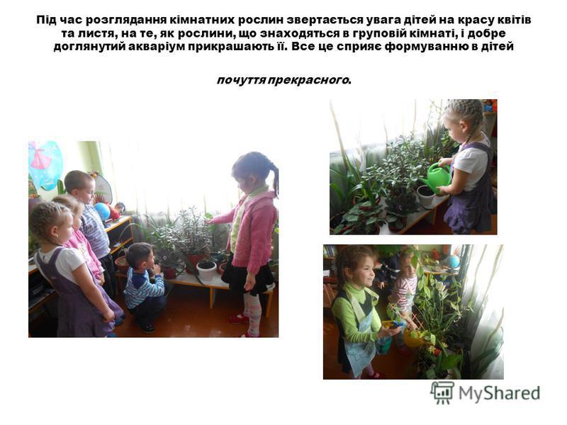 Під час розглядання кімнатних рослин звертається увага дітей на красу квітів та листя, на те, як рослини, що знаходяться в груповій кімнаті, і добре доглянутий акваріум прикрашають її. Все це сприяє формуванню в дітей почуття прекрасного.
