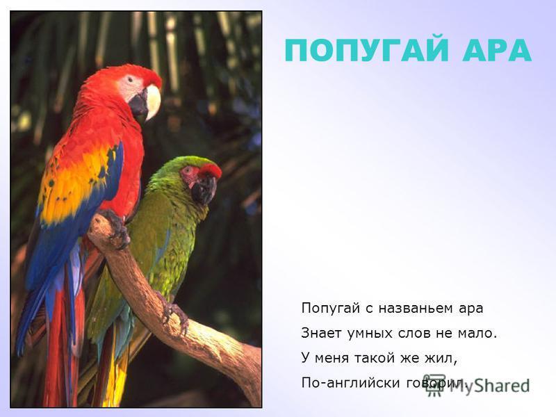 НЕКТАРНИЦА У нектарницы, у птицы Длинный клюв острее спицы. Им она в лесах тенистых Пьет нектар цветов душистых.