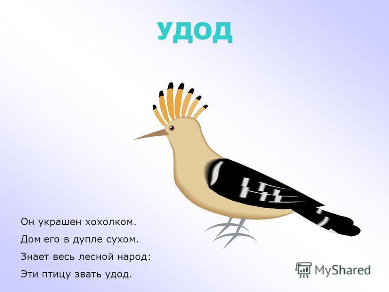 ПОПУГАЙ АРА Попугай с названьем ара Знает умных слов не мало. У меня такой же жил, По-английски говорил.