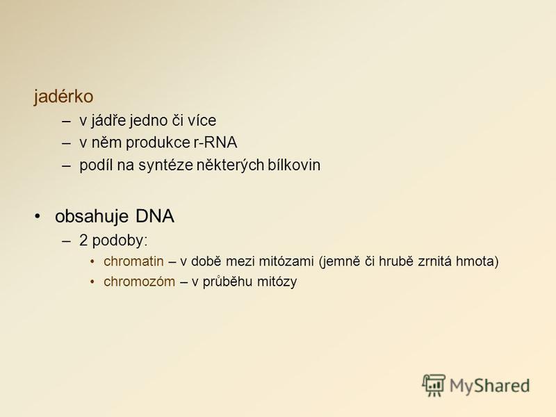 jadérko –v jádře jedno či více –v něm produkce r-RNA –podíl na syntéze některých bílkovin obsahuje DNA –2 podoby: chromatin – v době mezi mitózami (jemně či hrubě zrnitá hmota) chromozóm – v průběhu mitózy