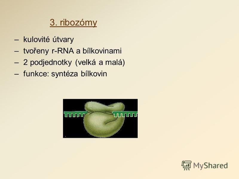3. ribozómy –kulovité útvary –tvořeny r-RNA a bílkovinami –2 podjednotky (velká a malá) –funkce: syntéza bílkovin