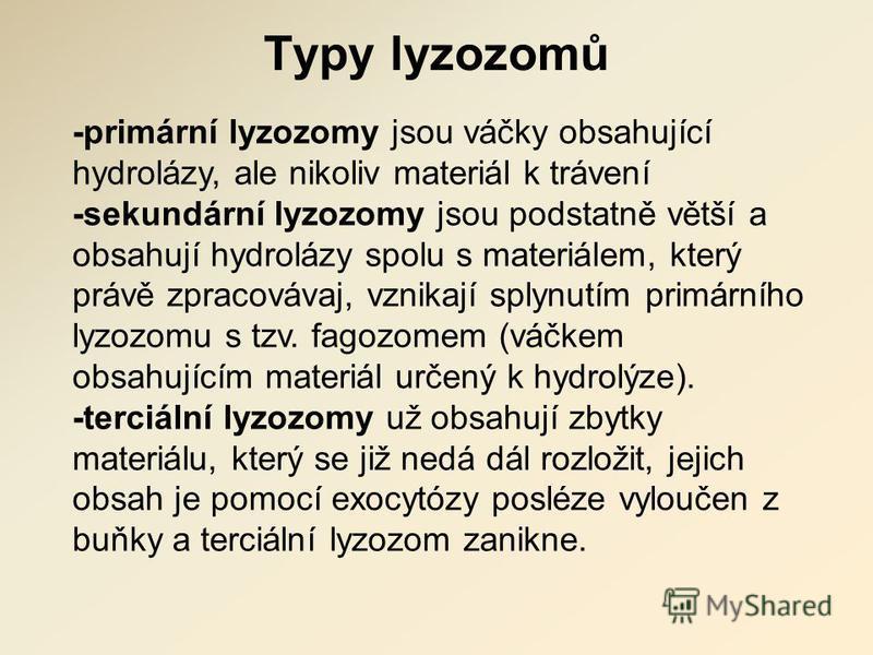 Typy lyzozomů -primární lyzozomy jsou váčky obsahující hydrolázy, ale nikoliv materiál k trávení -sekundární lyzozomy jsou podstatně větší a obsahují hydrolázy spolu s materiálem, který právě zpracovávaj, vznikají splynutím primárního lyzozomu s tzv.