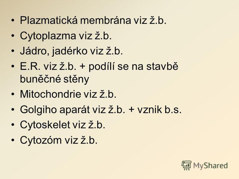 Plazmatická membrána viz ž.b. Cytoplazma viz ž.b. Jádro, jadérko viz ž.b. E.R. viz ž.b. + podílí se na stavbě buněčné stěny Mitochondrie viz ž.b. Golgiho aparát viz ž.b. + vznik b.s. Cytoskelet viz ž.b. Cytozóm viz ž.b.