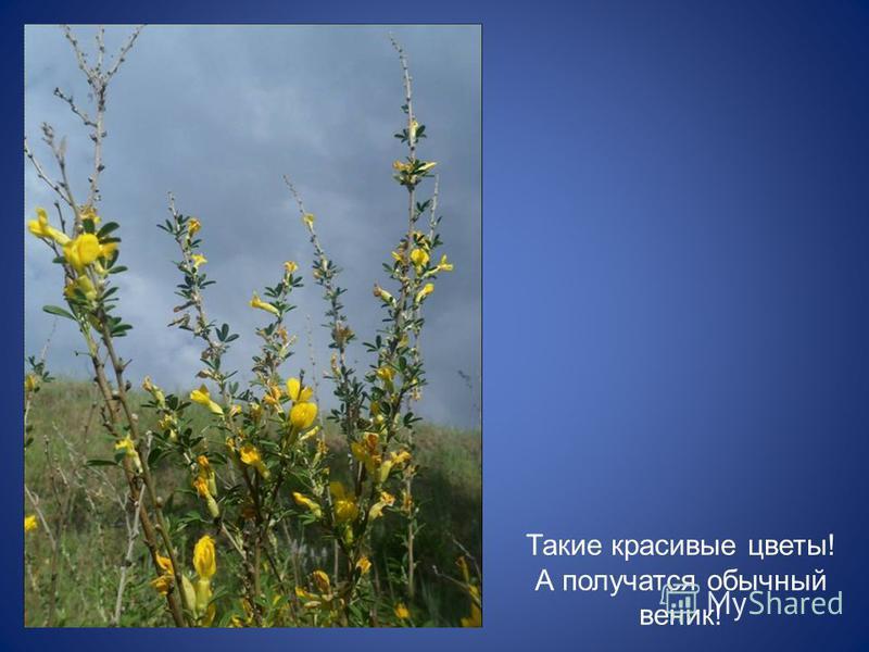 Такие красивые цветы! А получатся обычный веник!