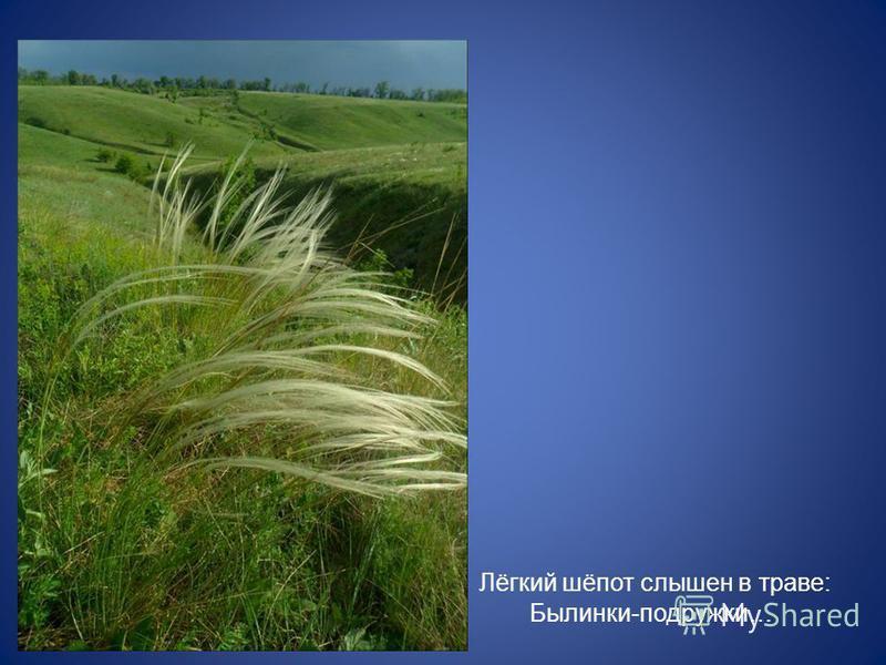 Лёгкий шёпот слышен в траве: Былинки-подружки…