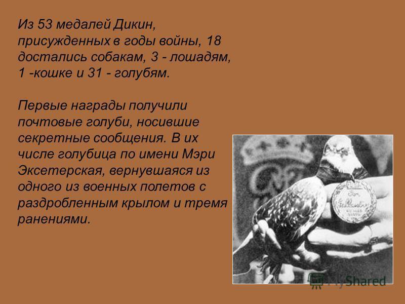 Из 53 медалей Дикин, присужденных в годы войны, 18 достались собакам, 3 - лошадям, 1 -кошке и 31 - голубям. Первые награды получили почтовые голуби, носившие секретные сообщения. В их числе голубица по имени Мэри Эксетерская, вернувшаяся из одного из