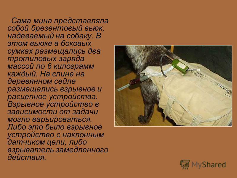 Сама мина представляла собой брезентовый вьюк, надеваемый на собаку. В этом вьюке в боковых сумках размещались два тротиловых заряда массой по 6 килограмм каждый. На спине на деревянном седле размещались взрывное и расцепное устройства. Взрывное устр