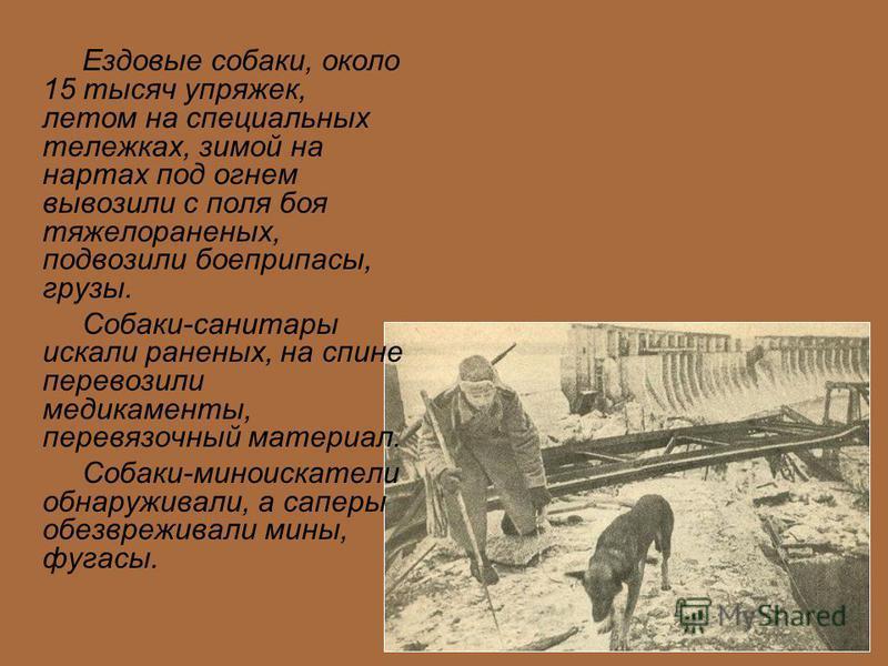 Ездовые собаки, около 15 тысяч упряжек, летом на специальных тележках, зимой на нартах под огнем вывозили с поля боя тяжелораненых, подвозили боеприпасы, грузы. Собаки-санитары искали раненых, на спине перевозили медикаменты, перевязочный материал. С