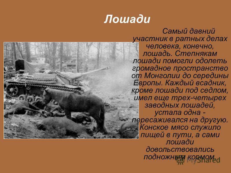 Лошади Самый давний участник в ратных делах человека, конечно, лошадь. Степнякам лошади помогли одолеть громадное пространство от Монголии до середины Европы. Каждый всадник, кроме лошади под седлом, имел еще трех-четырех заводных лошадей, устала одн