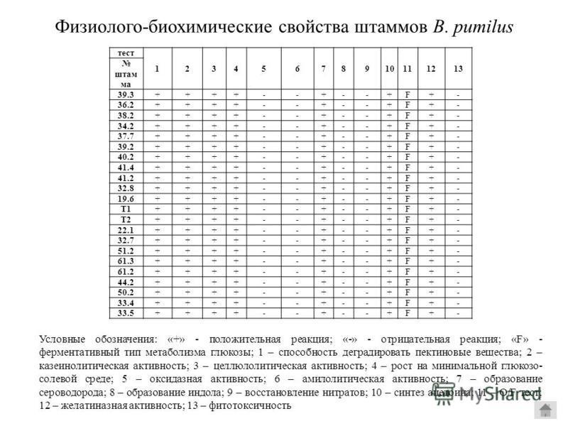 Физиолого-биохимические свойства штамммов B. pumilus тест 12345678910111213 штамм ма 39.3++++--+--+F+- 36.2++++--+--+F+- 38.2++++--+--+F+- 34.2++++--+--+F+- 37.7++++--+--+F+- 39.2++++--+--+F+- 40.2++++--+--+F+- 41.4++++--+--+F+- 41.2++++--+--+F+- 32.