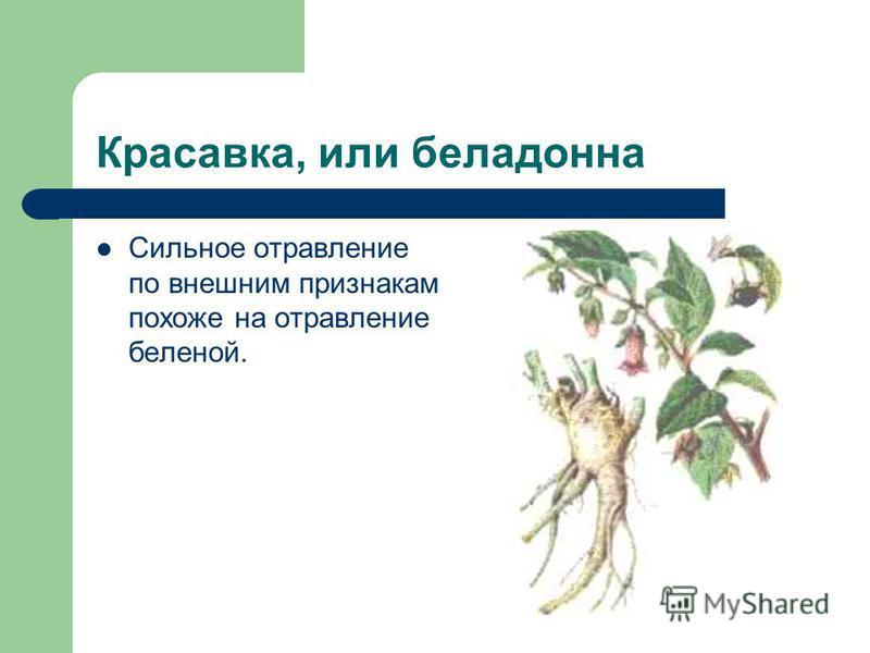 Красавка, или белладонна Сильное отравление по внешним признакам похоже на отравление беленой.