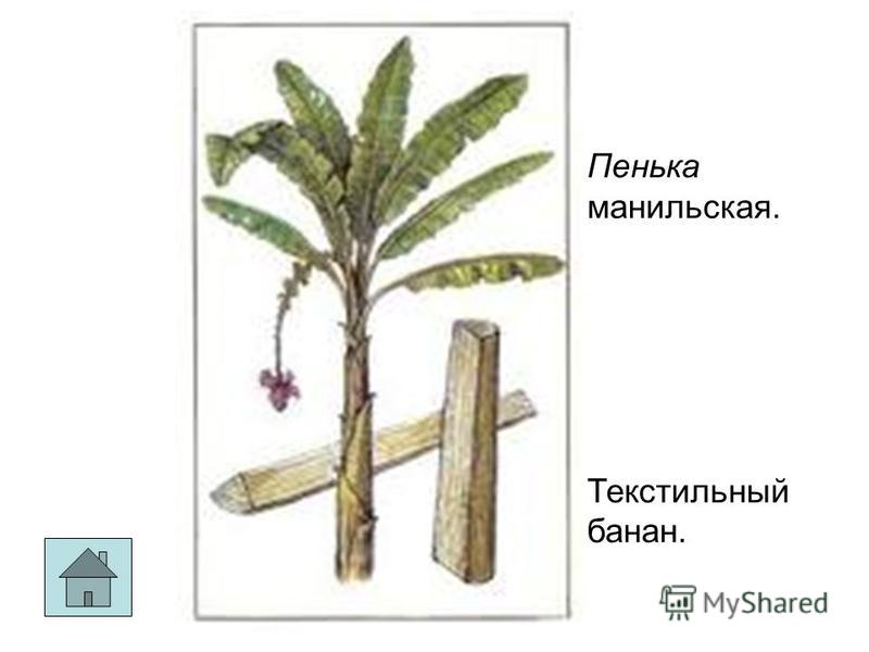 шелк Пенька манильская. Текстильный банан.