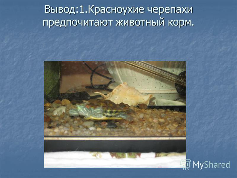 Вывод:1. Красноухие черепахи предпочитают животный корм.
