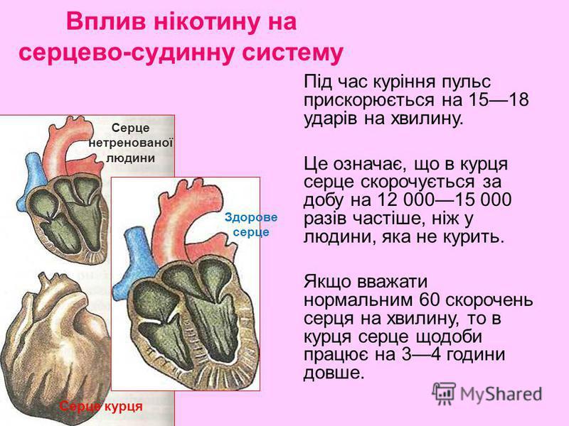 Під час куріння пульс прискорюється на 1518 ударів на хвилину. Це означає, що в курця серце скорочується за добу на 12 00015 000 разів частіше, ніж у людини, яка не курить. Якщо вважати нормальним 60 скорочень серця на хвилину, то в курця серце щодоб
