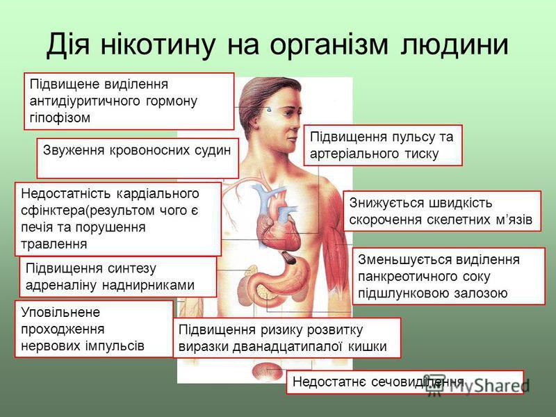 Дія нікотину на організм людини Підвищене виділення антидіуритичного гормону гіпофізом Звуження кровоносних судин Недостатність кардіального сфінктера(результом чого є печія та порушення травлення Підвищення синтезу адреналіну наднирниками Уповільнен