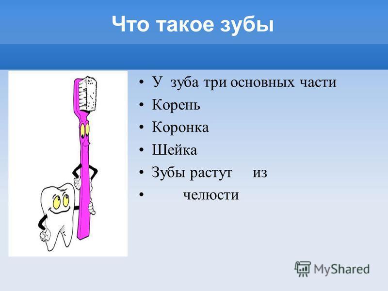 Что такое зубы У зуба три основных части Корень Коронка Шейка Зубы растут из челюсти