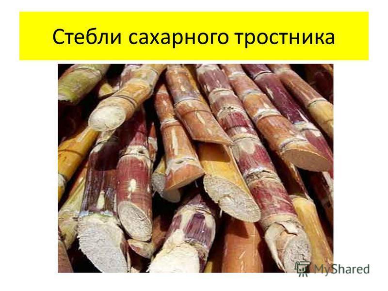 Стебли сахарного тростника