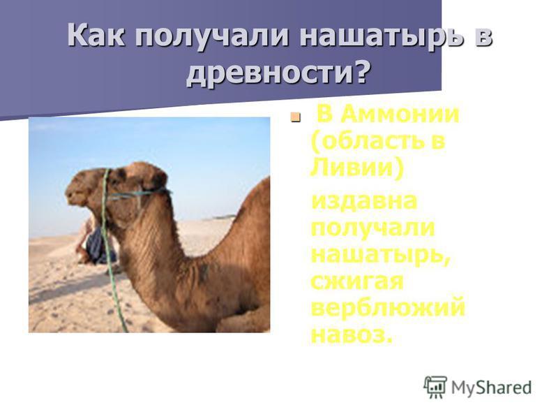 Как получали нашатырь в древности? В Аммонии (область в Ливии) издавна получали нашатырь, сжигая верблюжий навоз.