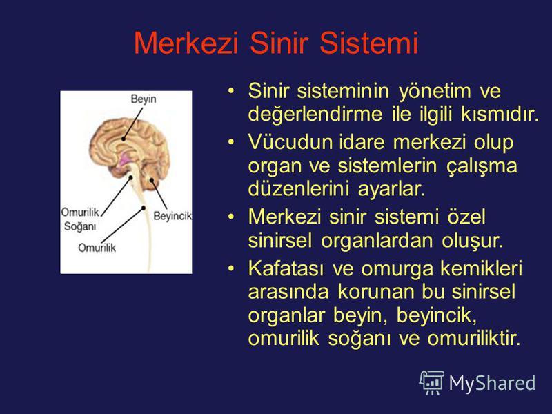 Merkezi Sinir Sistemi Sinir sisteminin yönetim ve değerlendirme ile ilgili kısmıdır. Vücudun idare merkezi olup organ ve sistemlerin çalışma düzenlerini ayarlar. Merkezi sinir sistemi özel sinirsel organlardan oluşur. Kafatası ve omurga kemikleri ara