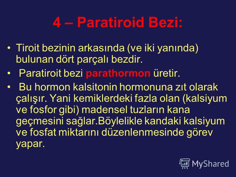 4 – Paratiroid Bezi: Tiroit bezinin arkasında (ve iki yanında) bulunan dört parçalı bezdir. Paratiroit bezi parathormon üretir. Bu hormon kalsitonin hormonuna zıt olarak çalışır. Yani kemiklerdeki fazla olan (kalsiyum ve fosfor gibi) madensel tuzları