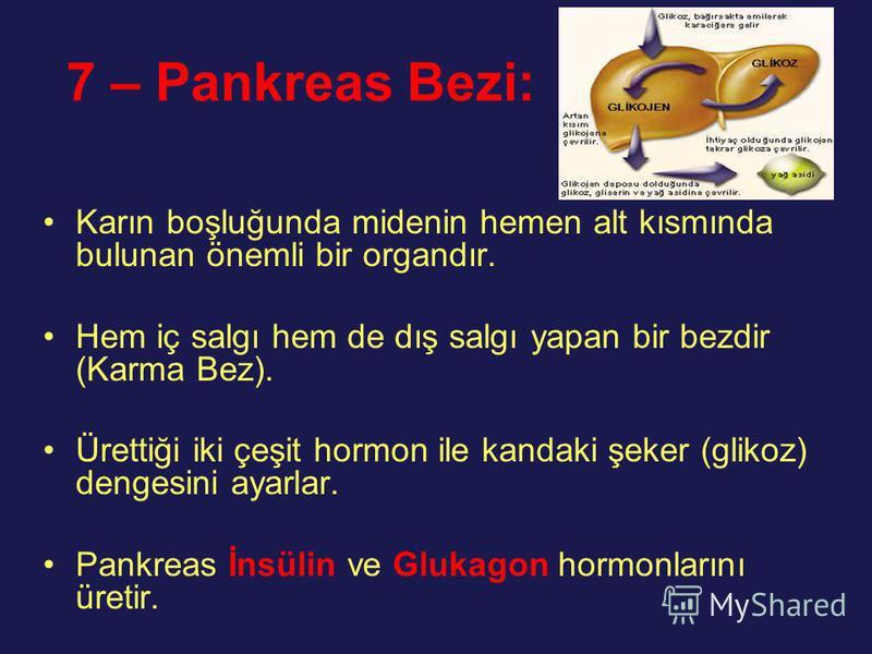 7 – Pankreas Bezi: Karın boşluğunda midenin hemen alt kısmında bulunan önemli bir organdır. Hem iç salgı hem de dış salgı yapan bir bezdir (Karma Bez). Ürettiği iki çeşit hormon ile kandaki şeker (glikoz) dengesini ayarlar. Pankreas İnsülin ve Glukag