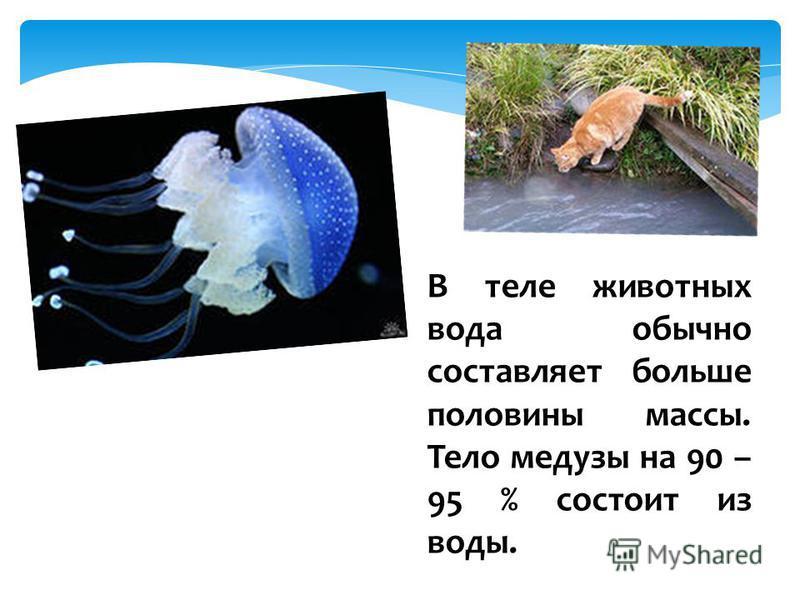 В теле животных вода обычно составляет больше половины массы. Тело медузы на 90 – 95 % состоит из воды.