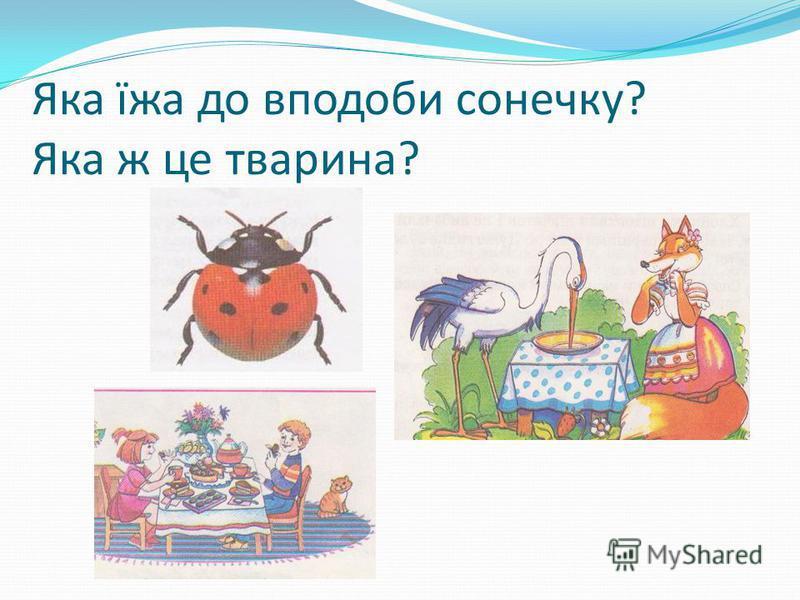 Яка їжа до вподоби сонечку? Яка ж це тварина?