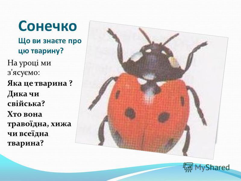 Сонечко Що ви знаєте про цю тварину? На уроці ми з'ясуємо: Яка це тварина ? Дика чи свійська? Хто вона травоїдна, хижа чи всеїдна тварина?