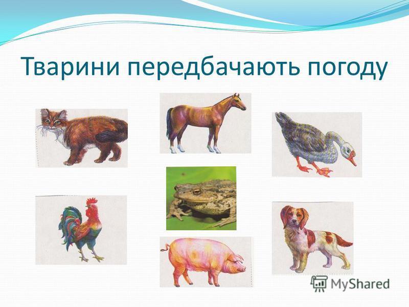 Тварини передбачають погоду