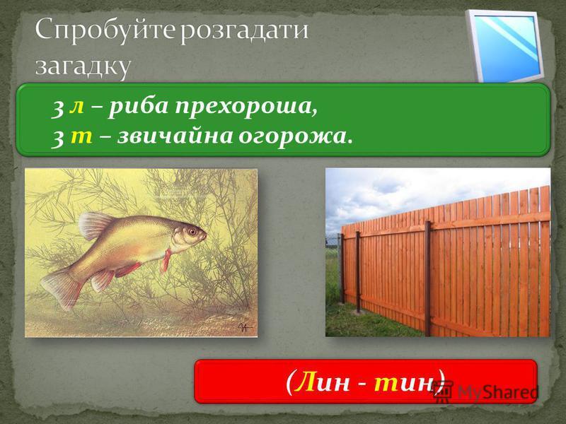 3 3 л – риба прехороша, 3 т – звичайна огорожа. 3 л – риба прехороша, 3 т – звичайна огорожа. (Лин - тин)