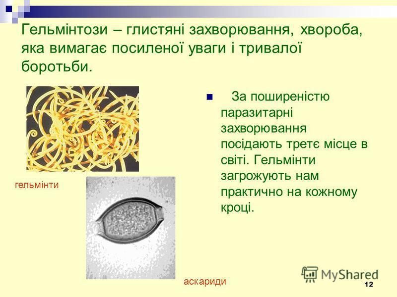 12 Гельмінтози – глистяні захворювання, хвороба, яка вимагає посиленої уваги і тривалої боротьби. За поширеністю паразитарні захворювання посідають третє місце в світі. Гельмінти загрожують нам практично на кожному кроці. гельмінти аскариди