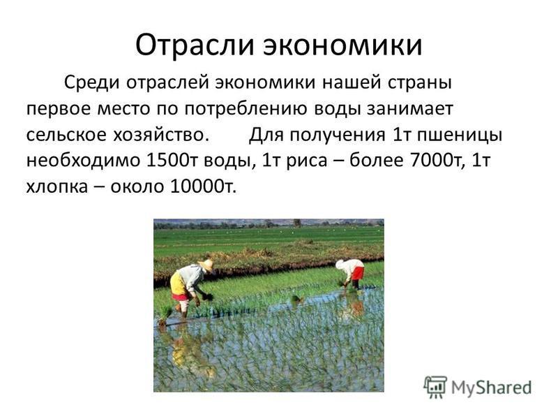 Отрасли экономики Среди отраслей экономики нашей страны первое место по потреблению воды занимает сельское хозяйство. Для получения 1 т пшеницы необходимо 1500 т воды, 1 т риса – более 7000 т, 1 т хлопка – около 10000 т.