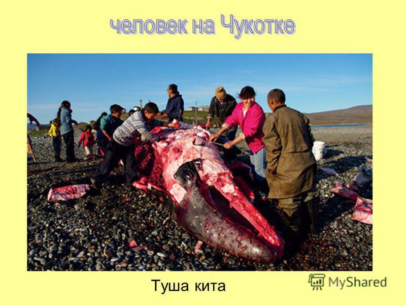 Туша кита