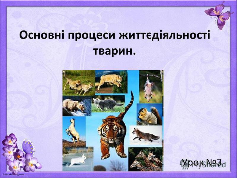 Основні процеси життєдіяльності тварин. Урок 3