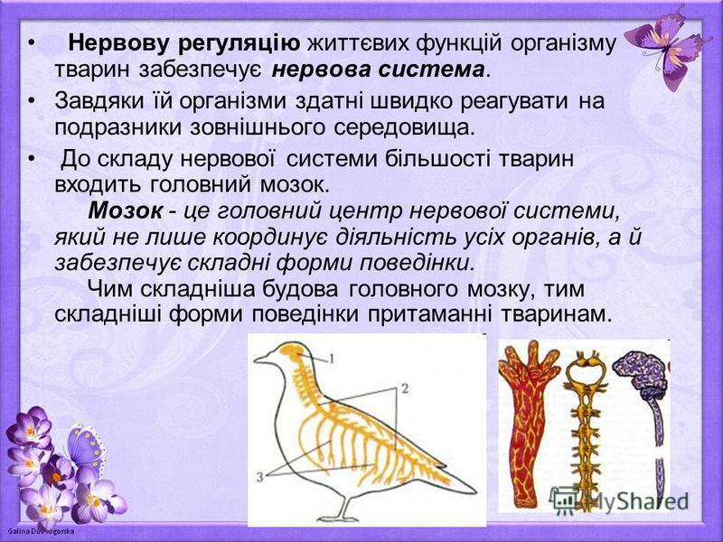 Нервову регуляцію життєвих функцій організму тварин забезпечує нервова система. Завдяки їй організми здатні швидко реагувати на подразники зовнішнього середовища. До складу нервової системи більшості тварин входить головний мозок. Мозок - це головний