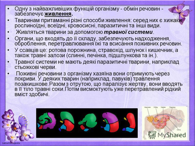 Одну з найважливіших функцій організму - обмін речовин - забезпечує живлення. Тваринам притаманні різні способи живлення: серед них є хижаки, рослиноїдні, всеїдні, кровосисні, паразитичні та інші види. Живляться тварини за допомогою травної системи.