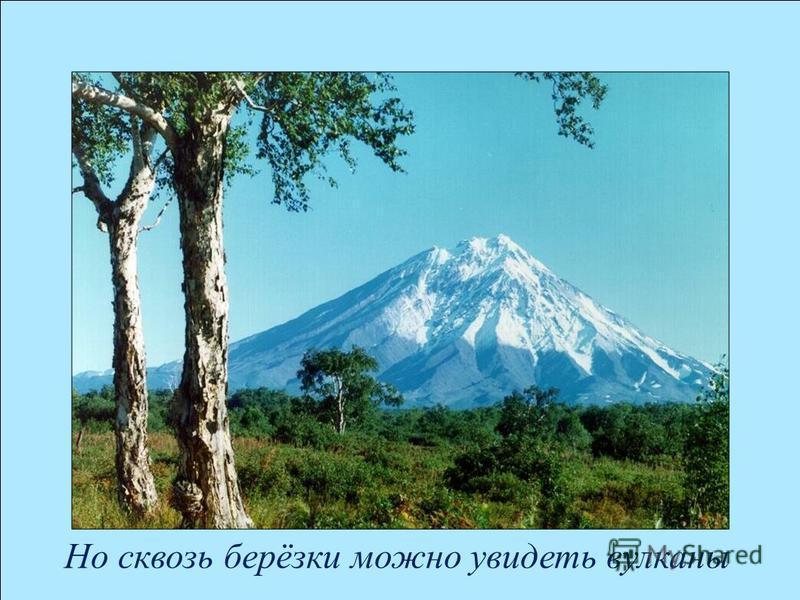 Но сквозь берёзки можно увидеть вулканы