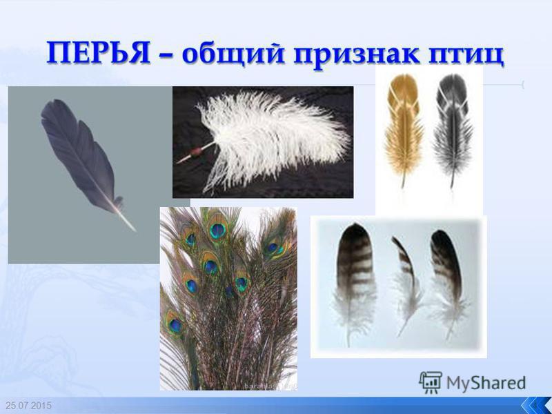 3 ОРНИТОЛОГИ – люди, которые занимаются изучением птиц.