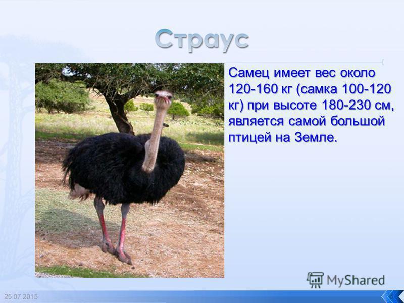 5 Самая маленькая птичка, она весит 2 грамма, ее длина 5 см.