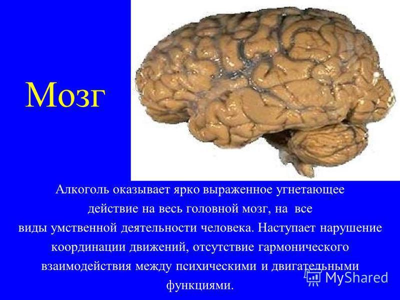 Мозг Алкоголь оказывает ярко выраженное угнетающее действие на весь головной мозг, на все виды умственной деятельности человека. Наступает нарушение координации движений, отсутствие гармонического взаимодействия между психическими и двигательными фун