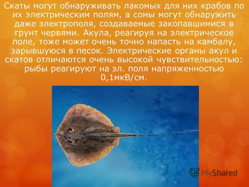 Скаты могут обнаруживать лакомых для них крабов по их электрическим полям, а сомы могут обнаружить даже электрополя, создаваемые закопавшимися в грунт червями. Акула, реагируя на электрическое поле, тоже может очень точно напасть на камбалу, зарывшую
