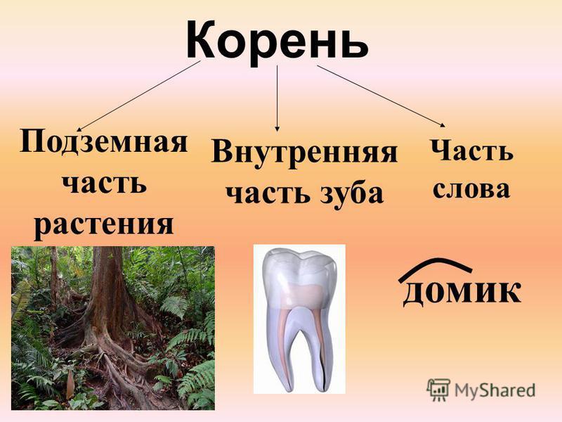 Корень Подземная часть растения Внутренняя часть зуба Часть слова домик