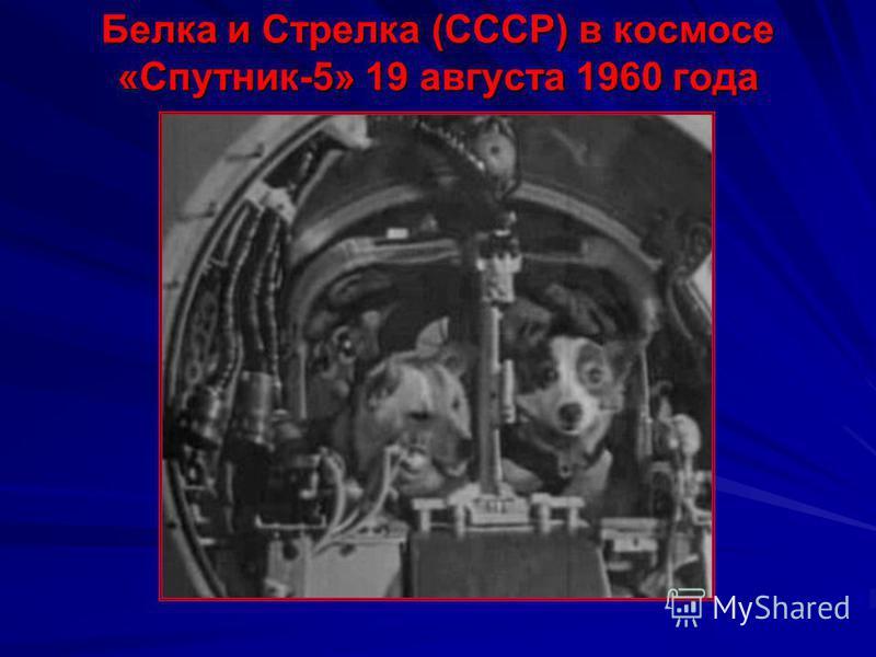 Лайка (СССР) – первый космонавт «Спутник-2» 3 ноября 1957 года Лайка (1954 – 3 ноября 1957) – собака, первое живое существо, выведенное на орбиту Земли. Она была запущена в космос 3 ноября 1957 в половине шестого утра по московскому времени на советс