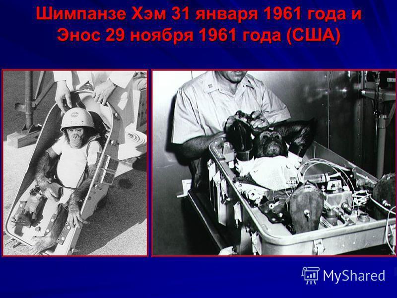 Белка и Стрелка (СССР) в космосе «Спутник-5» 19 августа 1960 года