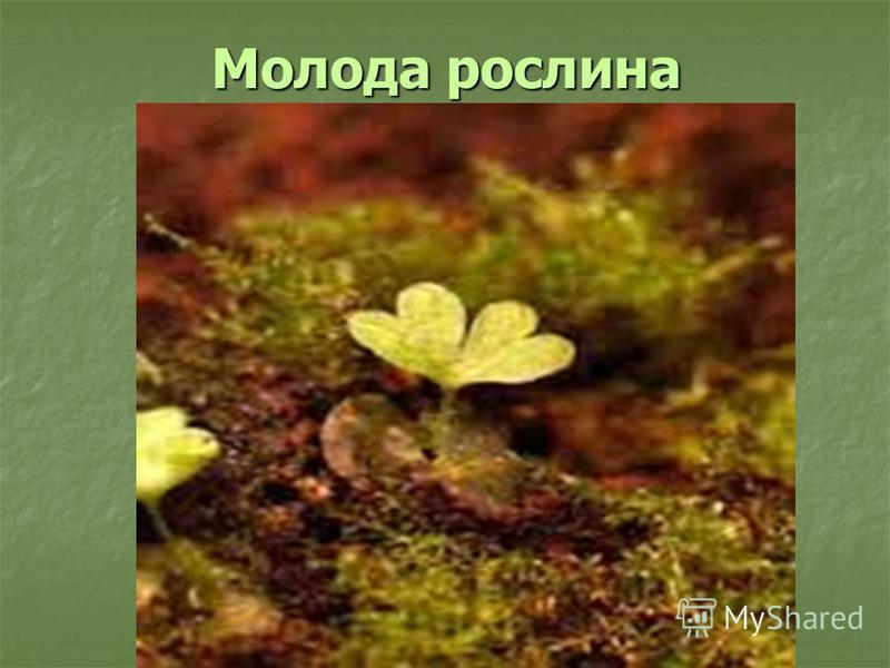 Молода рослина