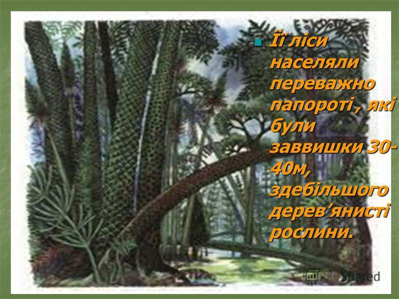 Її ліси населяли переважно папороті, які були заввишки 30- 40м, здебільшого деревянисті рослини. Її ліси населяли переважно папороті, які були заввишки 30- 40м, здебільшого деревянисті рослини.