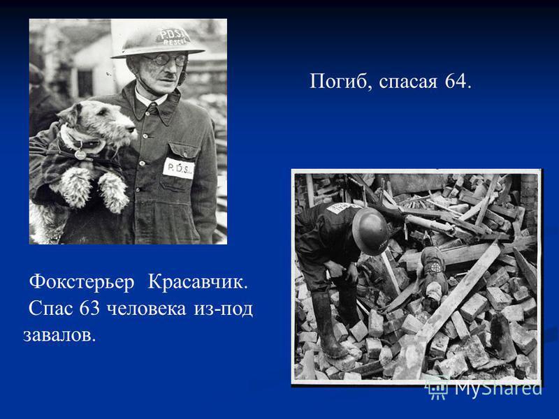 Фокстерьер Красавчик. Спас 63 человека из-под завалов. Погиб, спасая 64.