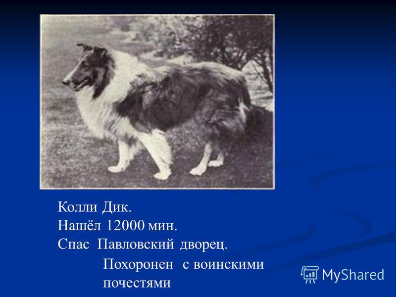 Колли Дик. Нашёл 12000 мин. Спас Павловский дворец. Похоронен с воинскими почестями